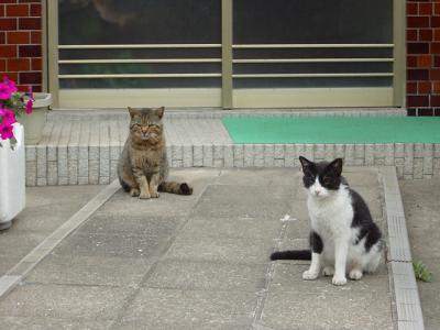 玄関先のネコ