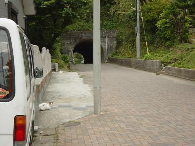 トンネルとネコ
