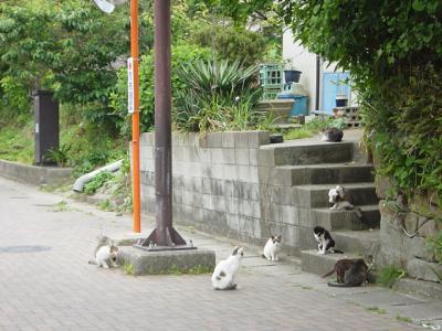階段にネコいっぱい