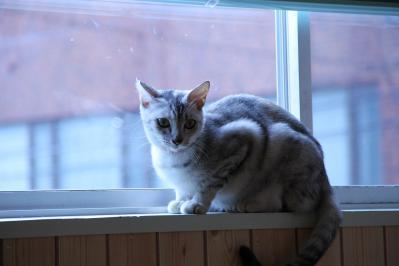 窓際のわさび
