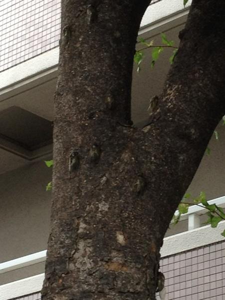 fc2blog_20120801195331689.jpg