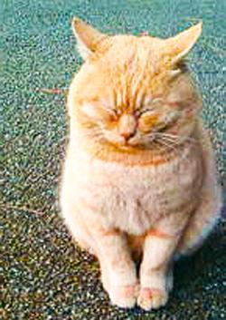 デブ猫のコピー
