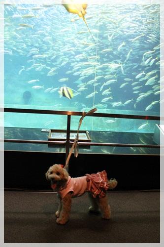 13魚と子夏