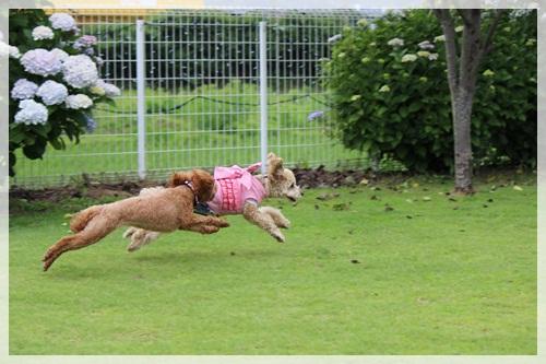 14飛行犬