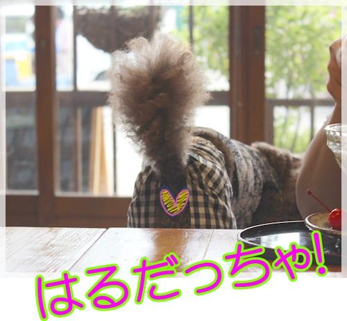 6はる (2)