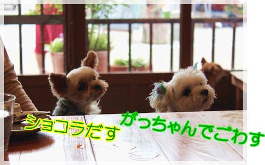 2がっちゃんしょこら (2)