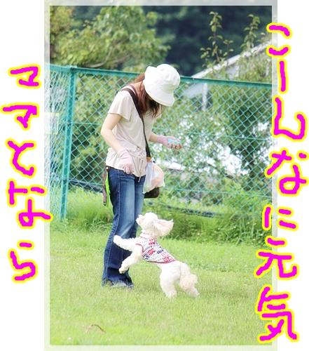 7_20121018221311.jpg