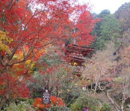 浄瑠璃寺三重塔2