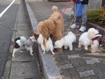 PC240157_convert_20121230011915[1]お散歩犬1