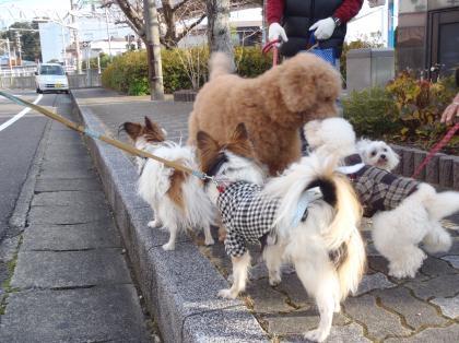 PC240158_convert_20121230012015[1]お散歩犬2