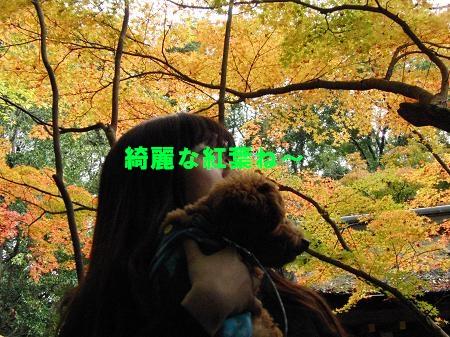 2012-11-14-6.jpg