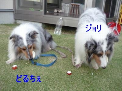 2012-8-26BBQ13.jpg