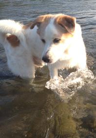 居候のアイ紀の川で鯉に遭遇