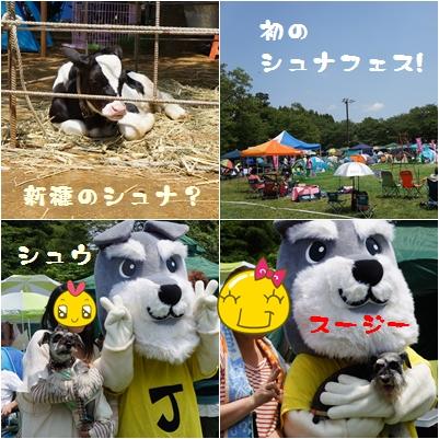 13_20120604003235.jpg