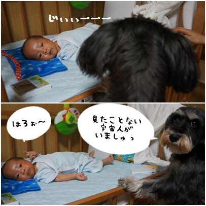 6_20121024140638.jpg