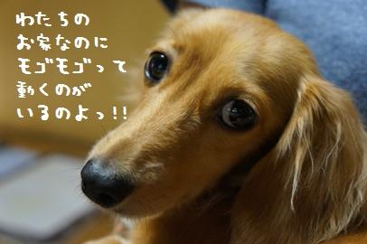 7_20121024140727.jpg