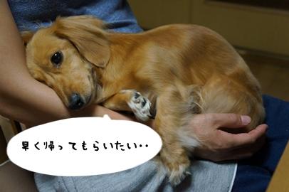 8_20121024140727.jpg