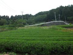 13:21きれいな茶畑