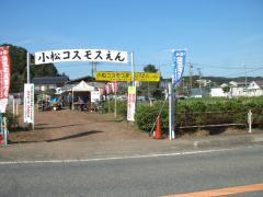 小山コスモス園