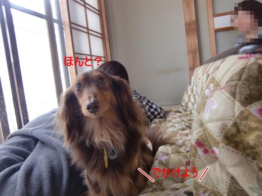 CIMG9695.jpg