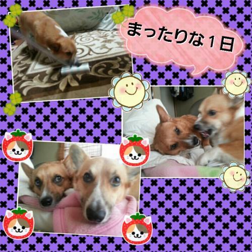 20121106184527_convert_20121106201229.jpg