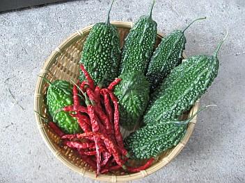 nigauri-pepper.jpg