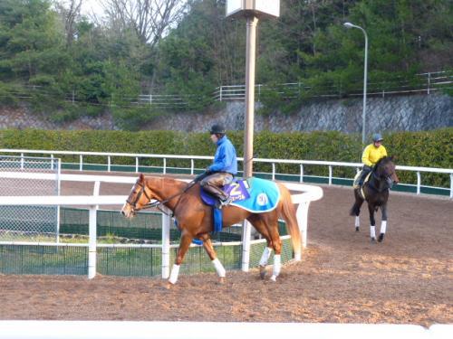 (4)オルフェーヴル(池江厩舎)