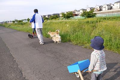 ネコで犬の散歩