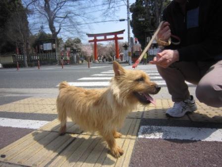 平野神社IMG_3856 - コピー