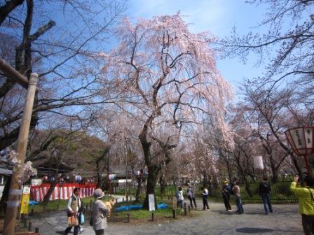 平野神社IMG_3860 - コピー