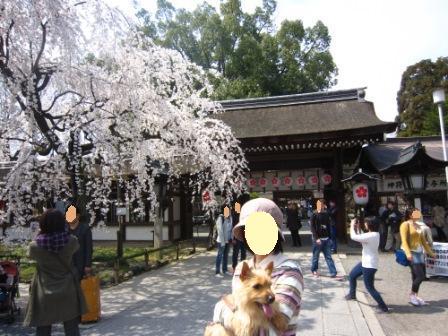 平野神社IMG_3867 - コピー