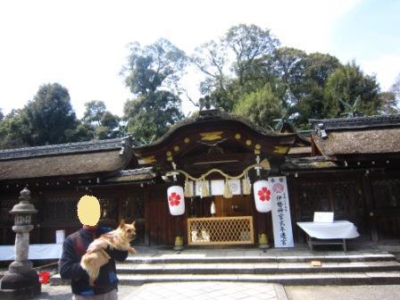 平野神社IMG_3886 - コピー