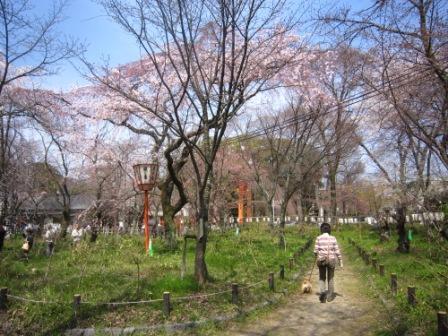 平野神社IMG_3900 - コピー