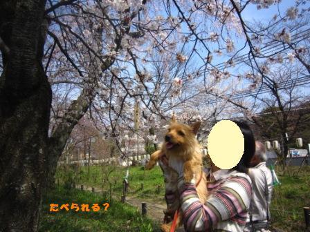 平野神社IMG_3894 - コピー
