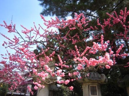 北野天満宮IMG_3915 - コピー