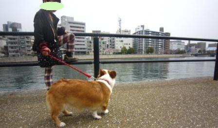 ゆめちゃんIMG_4020 - コピー