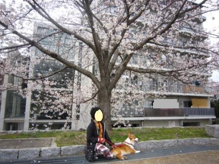 ゆめちゃんIMG_4041 - コピー