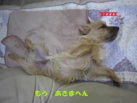 ロン寝IMG_4300 - コピー