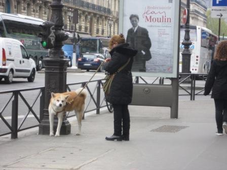 パリ わんIMG_4534 - コピー