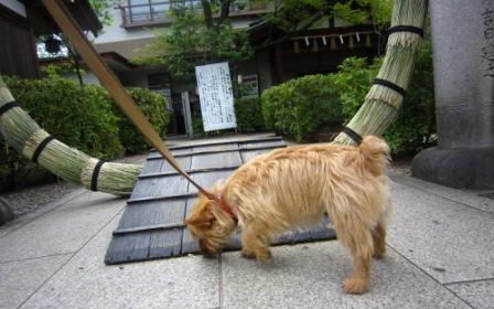 車折神社IMG_5254 - コピー