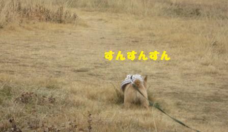 原っぱIMG_7519 - コピー