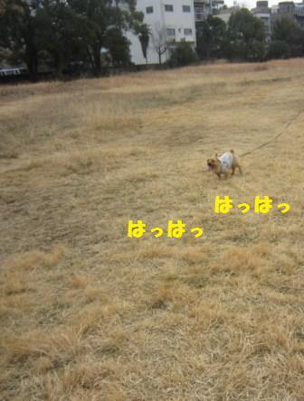 原っぱIMG_7525 - コピー