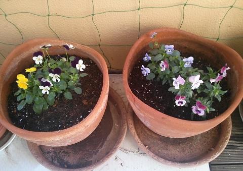 gardening205.jpg