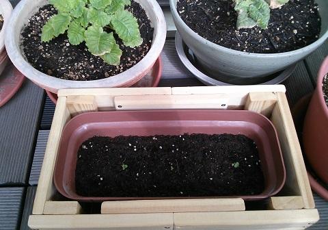 gardening209.jpg
