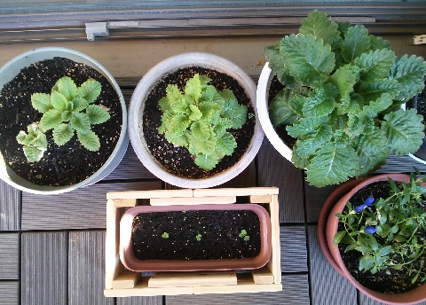 gardening216.jpg