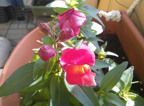 gardening220.jpg