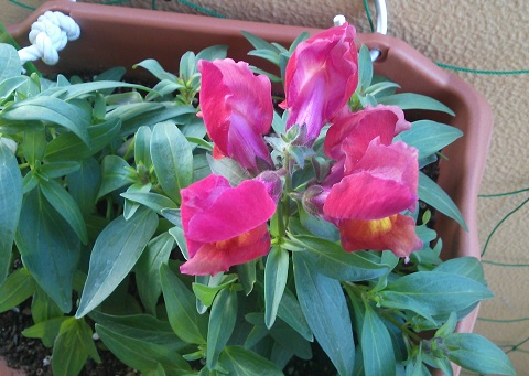 gardening230.jpg