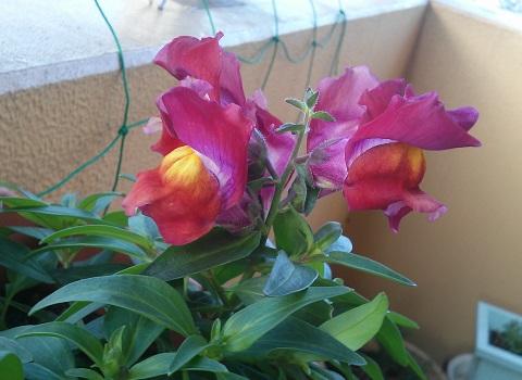 gardening231.jpg