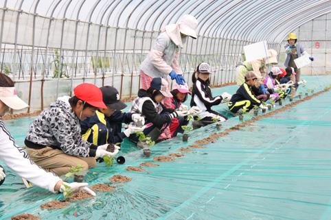 20120612小学4年生がメロンの植栽体験