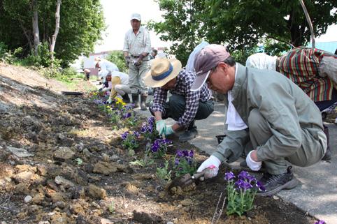 20120618沼田長生クラブが花の定植ボランティア